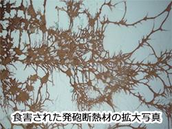 ヤマトシロアリの蟻道