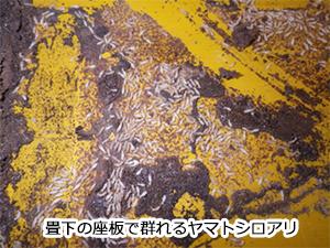 ヤマトシロアリの被害